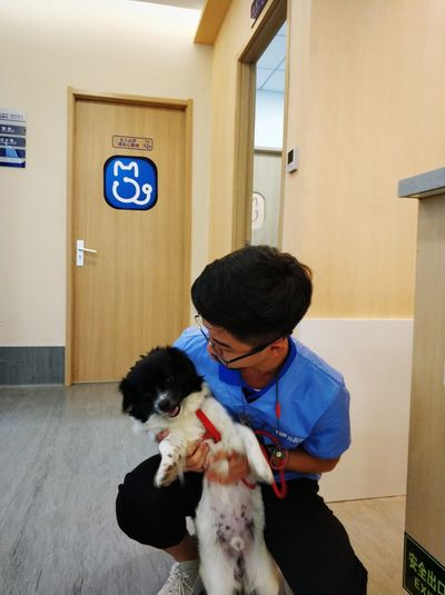 Mammal Domestic Animals Domestic One Animal Pets Canine Dog