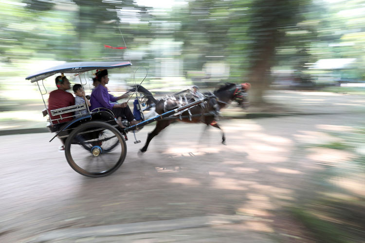 A group of tourists at Ragunan Zoo, Jakarta ride a delman. Blurred Motion City Delman Group Of People Horse Livestock Mammal Men Mode Of Transportation Motion Outdoors Real People Riding Street Transportation Vertebrate
