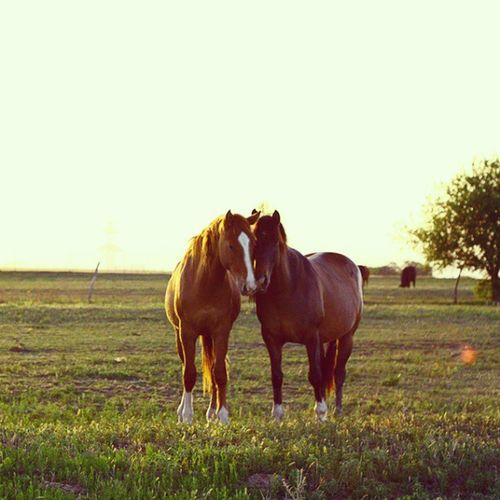 Horse Horses Love Awww
