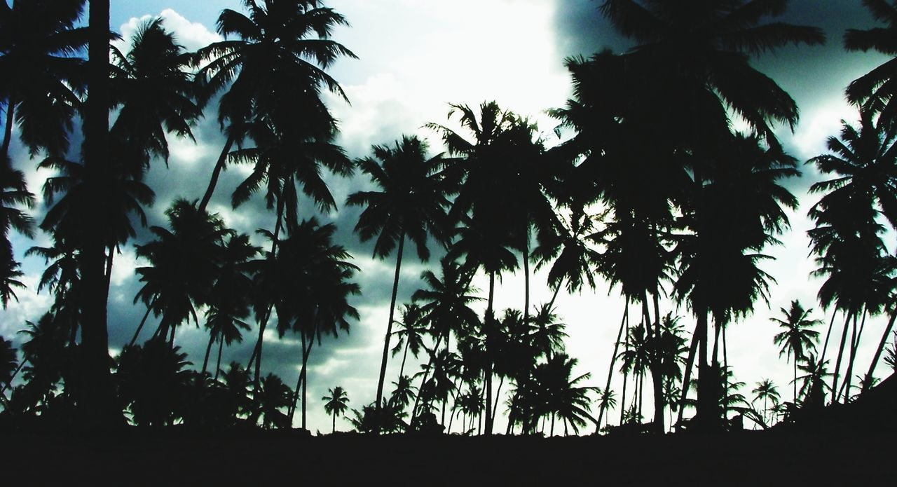 Silhouette palm trees against the sky