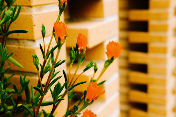 Plant Flower Flowering Plant Nature Close-up Beauty In Nature Freshness Growth Selective Focus No People Indoors  Fragility Vulnerability  Flower Head Yellow Petal Day Arrangement Potted Plant Flower Pot Flower Arrangement