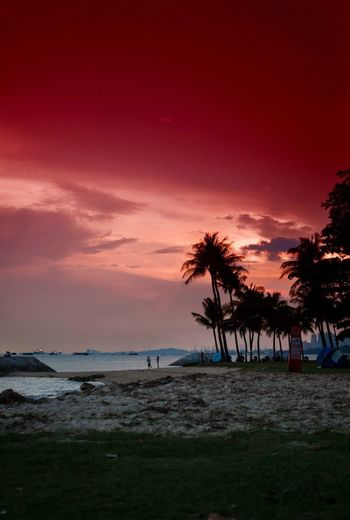 RePicture Travel Sunset red Sea singapore Singapore Blood Sky Red Clouds And Sky Sky And Clouds Sky And Trees