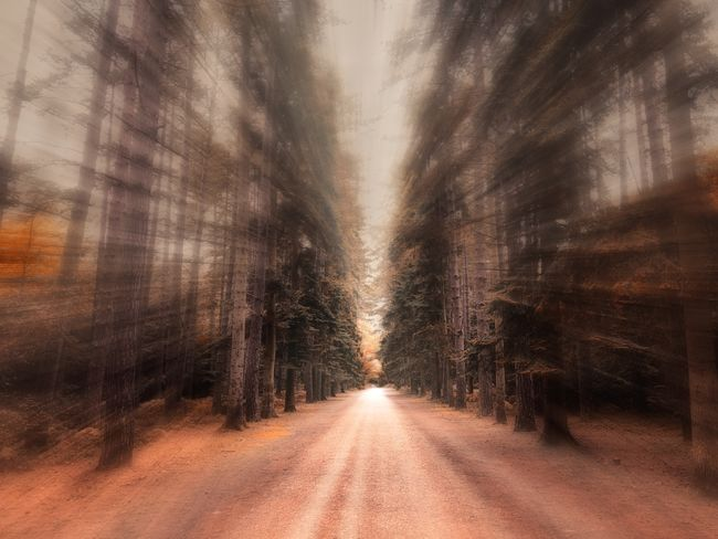 Forest zoom Direction The Way Forward Road Transportation Diminishing Perspective Tree Plant Nature No People Forest vanishing point Motion Day Empty Road Tranquility Land Outdoors Beauty In Nature Tranquil Scene Non-urban Scene WoodLand Treelined