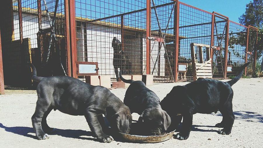 Dogs on floor against sky
