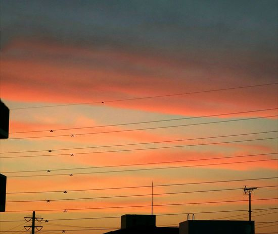 Wire Wires Sky Skyporn Cloud Cloudporn Sunset Sunsets Gray Red Orange Eveningglow Tokyo Silhouette Japan