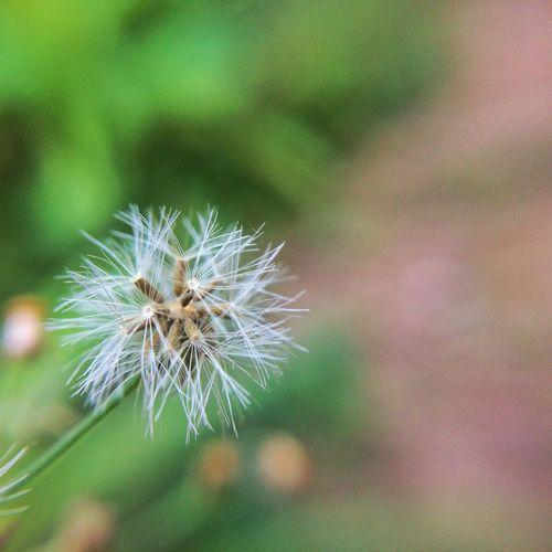 Wish. Nature