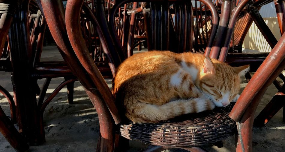 Mammal Cat Feline Animal Themes One Animal Animal Domestic Cat Pets Domestic Domestic Animals Chair Relaxation Wood - Material Vertebrate Seat No People Lying Down Sleeping Day Resting