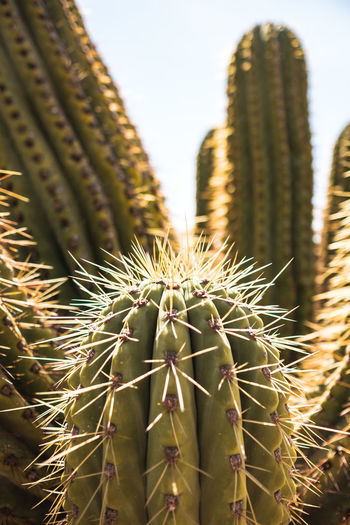 Succulent Plant Cactus Thorn Sharp Plant Spiked Growth Close-up Green Color Nature Focus On Foreground No People Day Beauty In Nature Field Land Outdoors Sunlight Barrel Cactus Sign Arid Climate Spiky