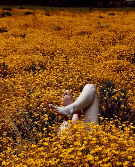 Low section of woman feet up while lying in flowering field