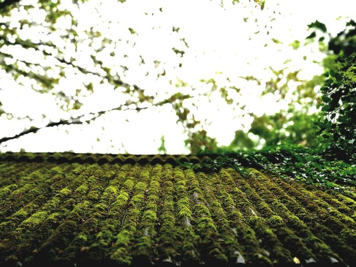 Moss Green Nature Tree Outdoors House Roof Focus Intense Colors Intense Intense Contrast Tranquility Beauty In Nature Day Intense Look Whoeyem? EyeEm Nature Lover EyeEm Best Shots - Nature Germany Baden-Württemberg  EyeEm Best Shots EyeEmBestPics EyeEmNewHere