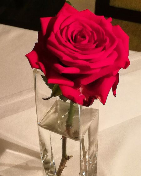 A rose is a
