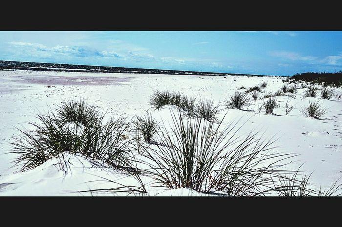 Sandhammaren Beachphotography Sea And Sky Ystad Beach Showcase July Summer ☀ Ystad EyeEmBestPics österlen  Skåne