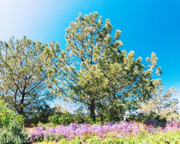 Tree Nature Blue Low Angle View Sky Growth Plant No People Beauty In Nature Day Close-up Outdoors Scenics Blossom Blossom Flower Tranquility Blooming Blue Sky
