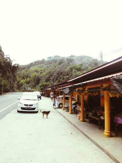 If you ever find yourself on the road between KK City and Tambunan, Sabah - make sure to check out the many roadside stalls that sell the best of local produce and more. Tambunan Kk City Scenery Photos Home This Is My Life This Is My World Food People