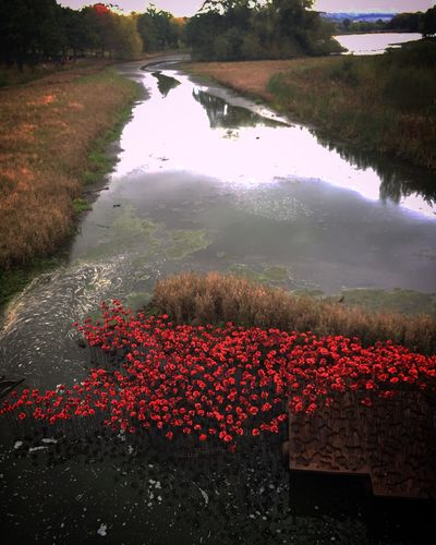 Poppies Check This Out Countryside Art Sculpturepark Rememberancesunday Poppies  Autumn Countryside