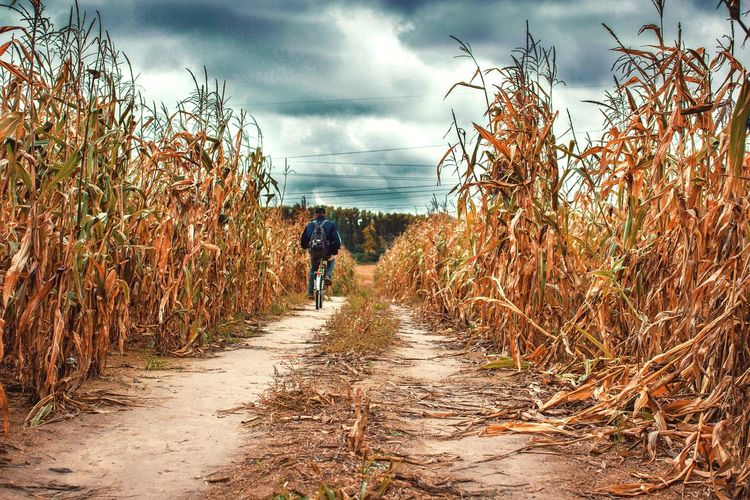 Cloud - Sky Sky The Way Forward Walking Nature Cornfield Road Bicycle Bicycling Travel Mammal Storm Storm Cloud Badweather