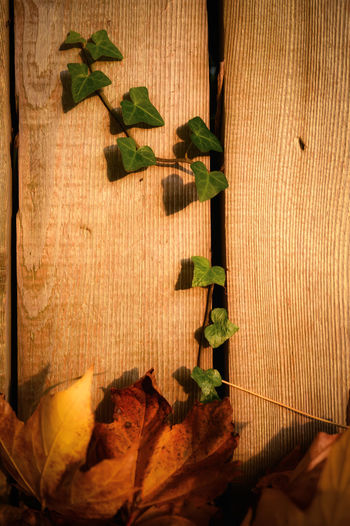 Close-up of leaves on wooden table