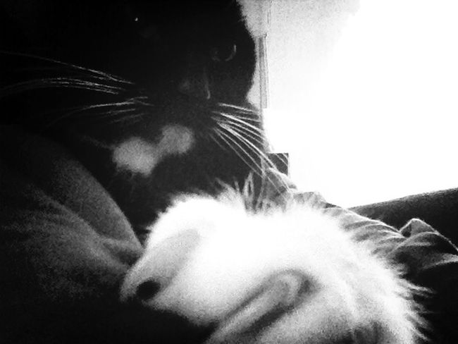 Cat Smilla Show Me Your Hand Black And White