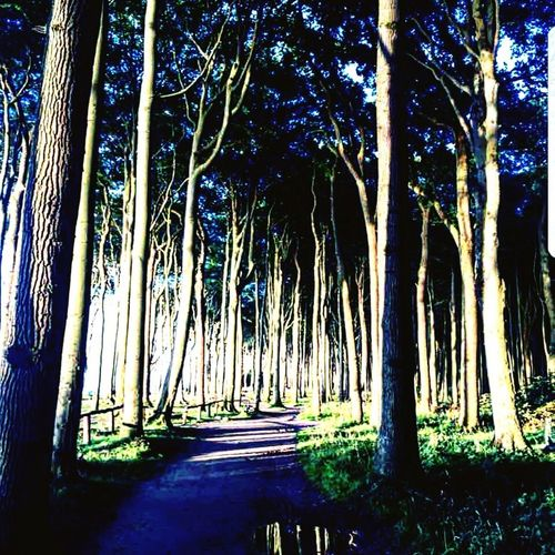 Tree Forest Nature Tree Trunk Tranquility Tranquil Scene No People Beauty In Nature Outdoors Day Growth Scenics
