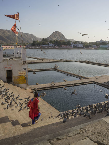 lady feeding the birds. Adult Animal Themes Architecture Beach Bird Built Structure City Day Holy Sacred Lady Large Group Of Animals Lifestyles One Person Outdoors People Pushkar Indi Relaxing Water
