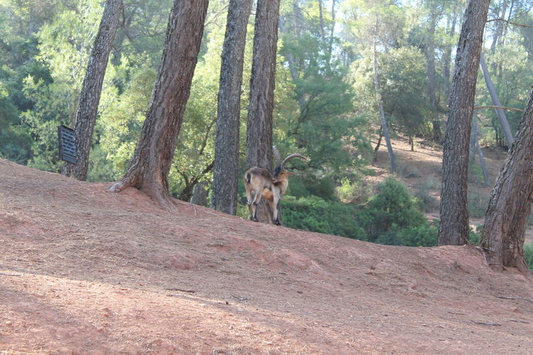 Cazorla Nature Reserve II Jaén Nature Nature Photography No Filter, No Edit, Just Photography Animal Themes Animal Wildlife Animals In The Wild Beauty In Nature Cazorla Forest Nature Nature_collection Naturelovers One Animal Outdoors Tree WoodLand