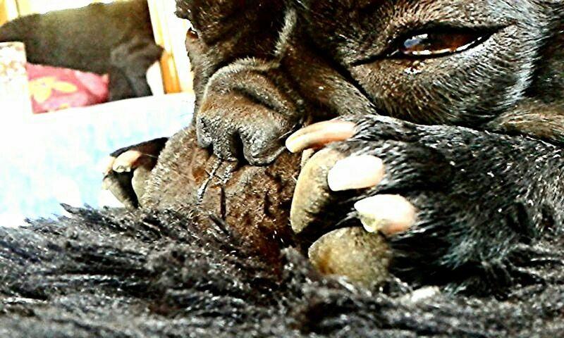 Dog Bouledogue Cute Love