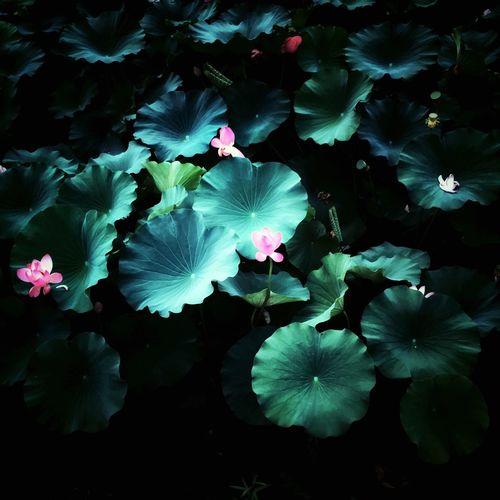 Hello World EyeEm Beautiful Green Nature Flowers Colorful
