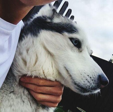 Lo importante de todo es amarlos y quererlos Dogs