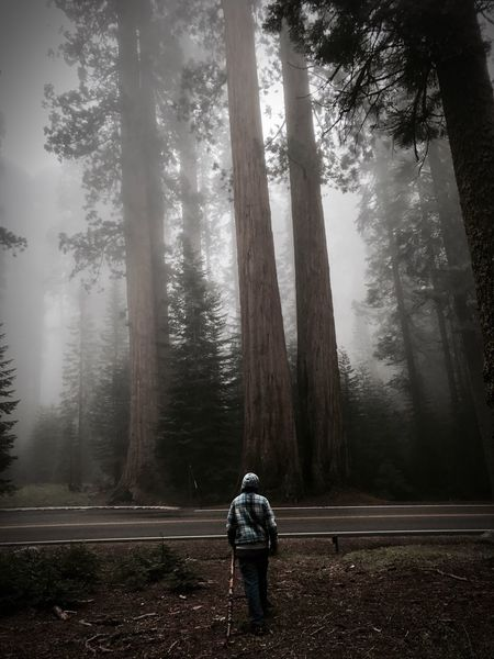 This is my favorite photo that I've taken. Forest WoodLand Fog Lone Person Brother Mysterious Beautiful seems desolate... EyeEm Selects The Week On EyeEm The Week On EyeEm The Week On EyeEm Lost In The Landscape
