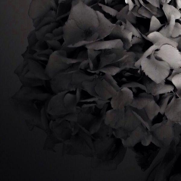 Night Lights Flowers Light And Shadow Dark Black And White