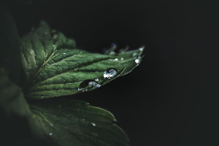 Close-up of water drops on leaves at night