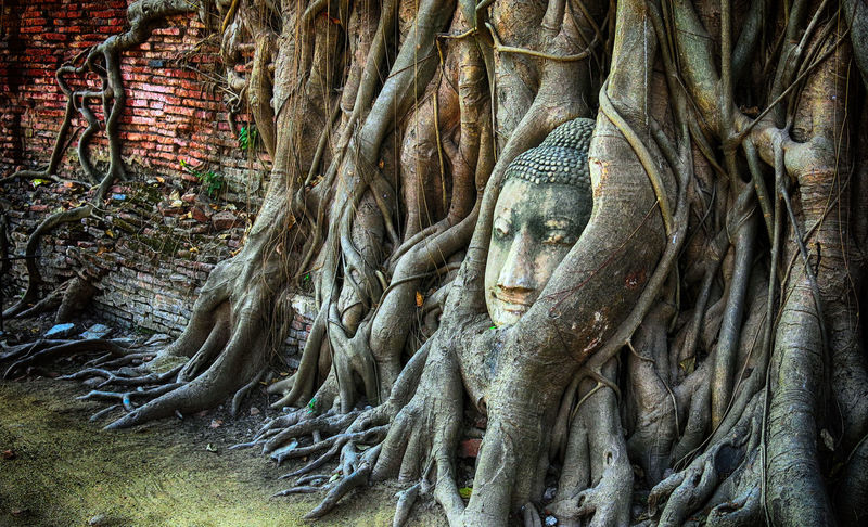 Abundance Ancient Civilization Backgrounds Beauty In Nature Close-up Day Detail EyeEm Gallery Full Frame Growth Monument Natural Pattern Nature No People Outdoors Part Of Plant The Past Tranquility Tree Tree Trunk Prisoner Of The Past The 2016 EyeEm Awards