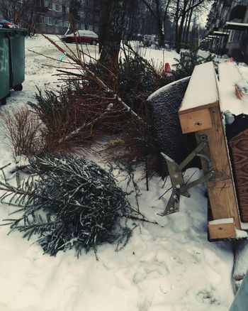 No People Tree Outdoors Winter Day Nature Snow Close-up EyeEmNewHere Afterparty waste Christmas Tree Preservation Waste New Year Party New Year Resolutions 2017 Save Savetheplanet Plant A Tree Waste Collection Service Waste Collection Xmas Christmastime
