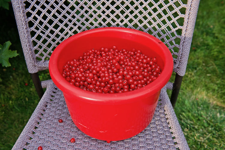 Red currants in container on chair