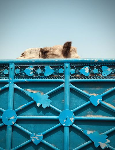 View of cat on railing against sky