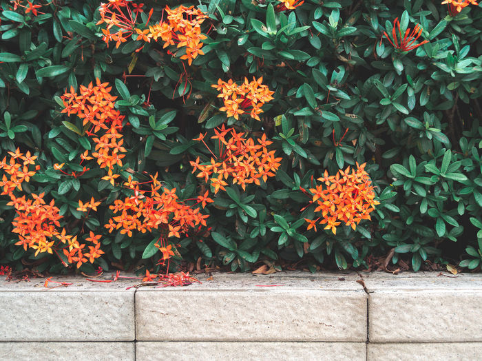 Close-Up Of Orange Flowering Plants