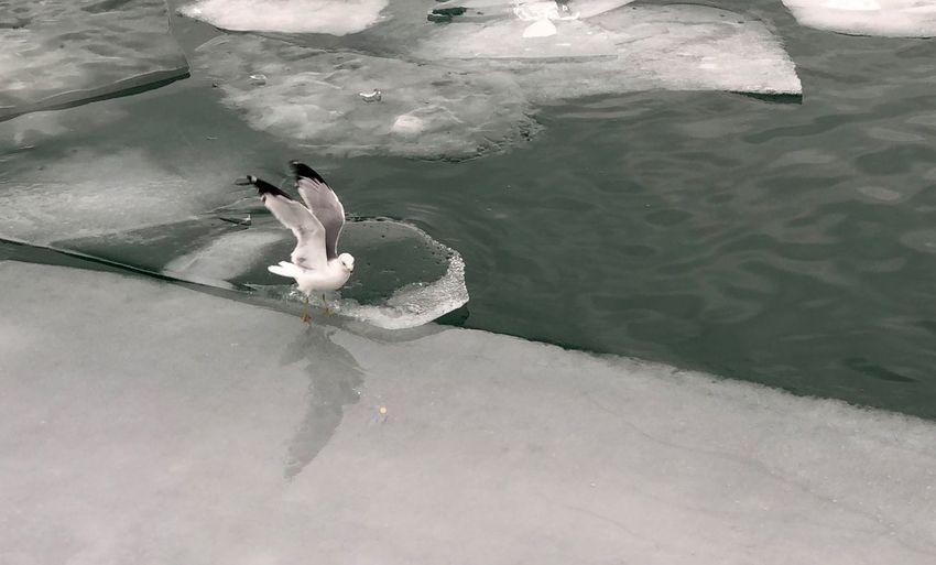 #möve #bird #ice