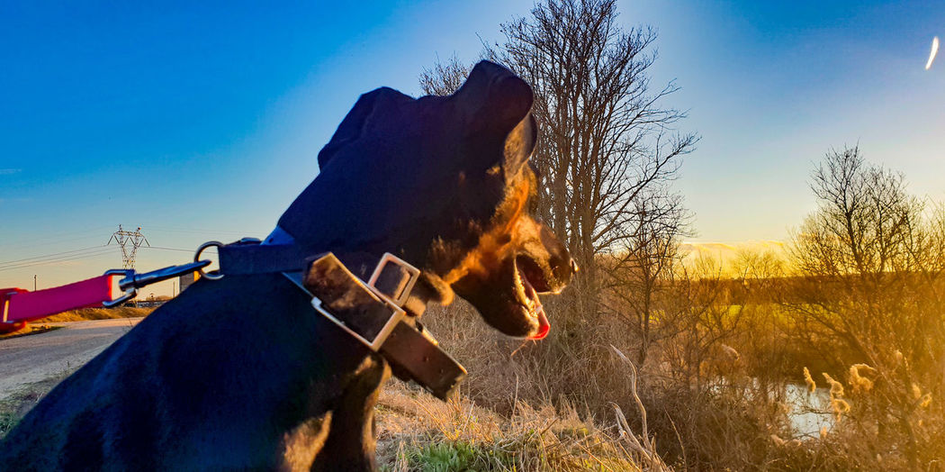 Horse on field against blue sky