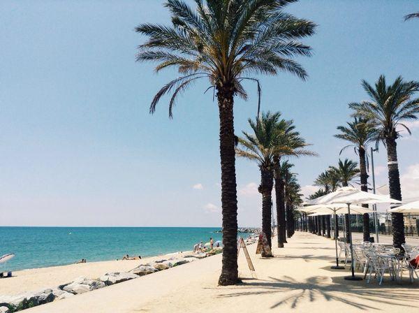 Mataró Palm Trees Summer Beach