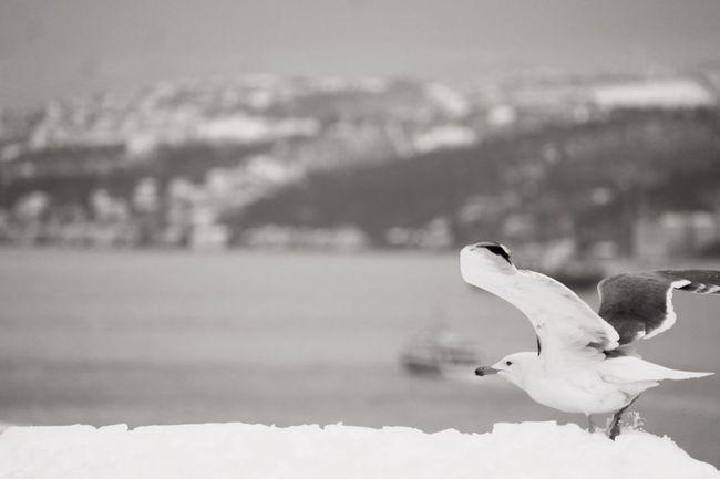 Monochrome Blackandwhite Istanbul