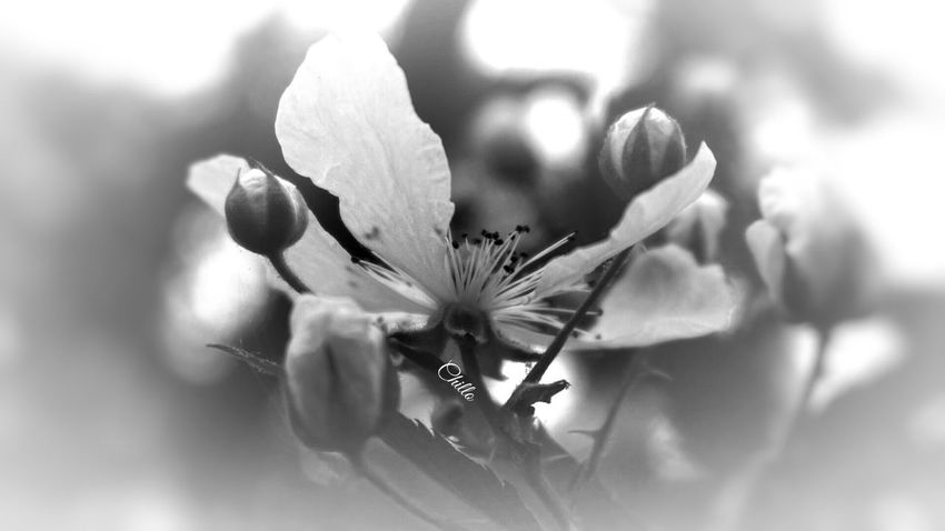 Blackandwhite Monochrome Blackandwhite Photography Flowerporn Eye4photography  Sony A6000 Beauty Photography EyeEm Best Shots Macro