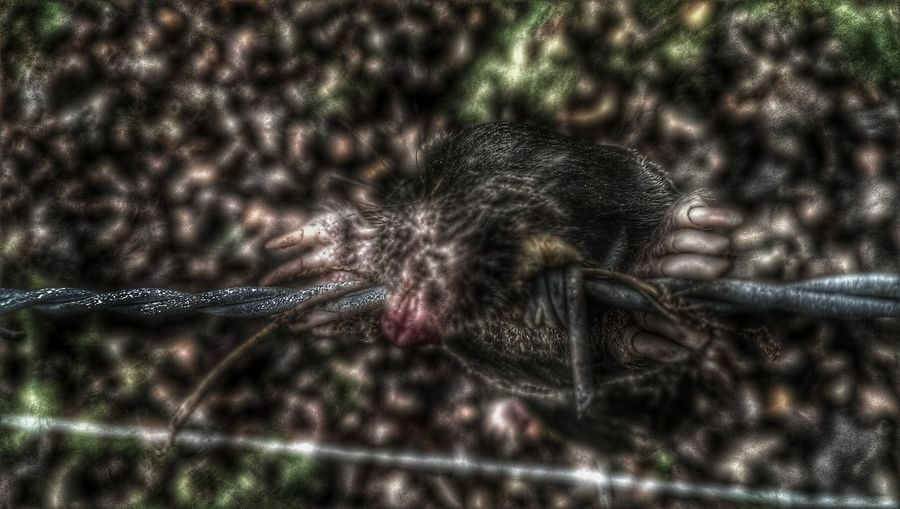 You've Got Me Wired Dead Horror In Nature Dark Photography