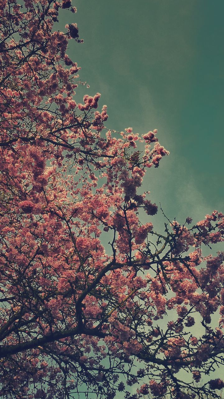 tree, flower, beauty in nature, nature, growth, low angle view, branch, blossom, no people, fragility, springtime, day, tranquility, outdoors, freshness, sky, scenics, close-up