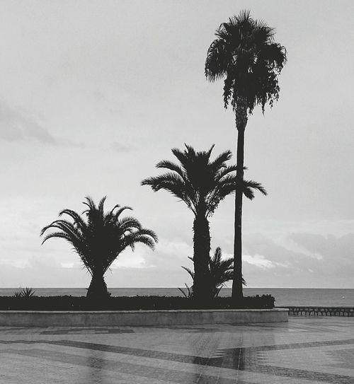 Palm Palm Tree Sea Tranquil Scene Horizon Over Water Beach Coconut Palm Tree Ocean