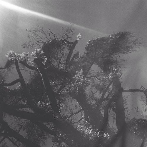 Árvore mal assombrada.