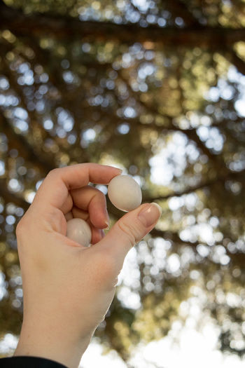 Birds Egg Growth Nature Tree Youth Body Part Close-up Day Egg Finger Focus On Foreground Food Food And Drink Hand Holding Human Body Part Human Hand Human Limb Lifestyles Low Angle View Nature One Person Outdoors Pineneedles Plant Real People Spring Tree Unrecognizable Person