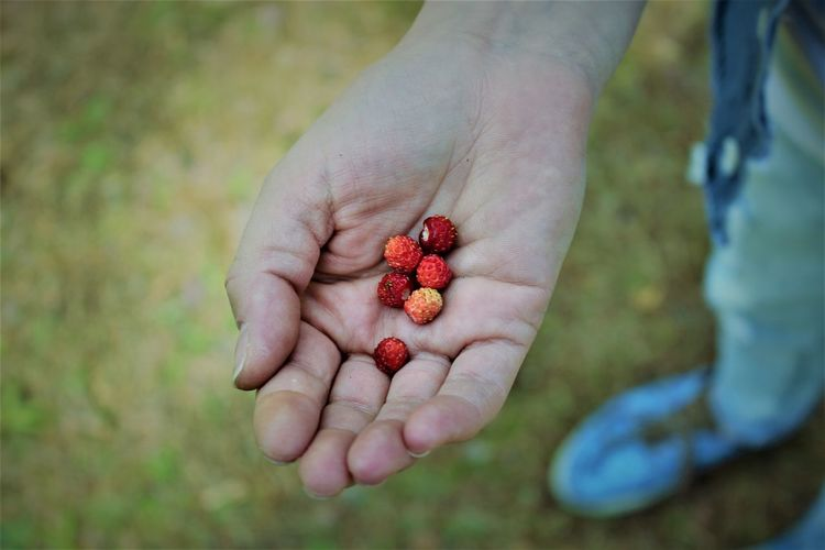 Berries Berry Fruit Close-up Forest Fruits Forest Goods Freshness Fruit Hand Hands Healthy Eating Human Hand Red Wild Strawberries Wild Strawberry Sommergefühle