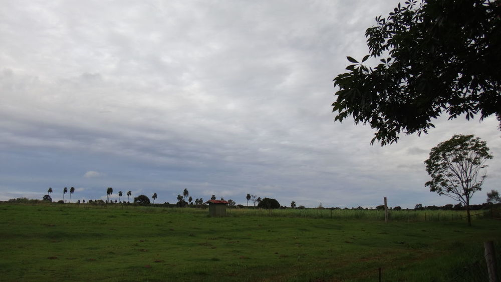 AVARE SP BRAZIL Agriculture Beauty In Nature Cattle Cloud - Sky Cow Day Domestic Animals Farm Animal Field Flock Of Sheep Grass Grazing Landscape Large Group Of Animals Livestock Mammal Nature Outdoors Rural Scene Scenics Sheep Sky Tranquil Scene Tranquility Tree