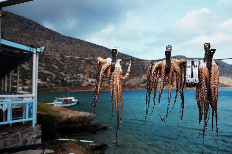 View of octopus hanging on clothesline against sea
