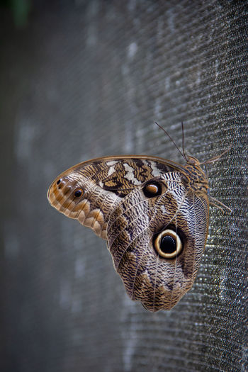 EyeEmNewHere Animal Animal Body Part Animal Themes Animal Wildlife Animals In The Wild Brown Brown Color Butterfly Butterfly - Insect Butterfly Collection Close-up Eyes Focus On Foreground Natural Pattern Nature No People One Animal Outdoors Vertebrate Zoology